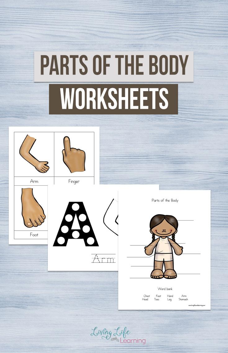 parts of the body worksheets for kids. Black Bedroom Furniture Sets. Home Design Ideas