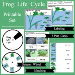 Parts of a Frog and Life Cycle Printable Activities