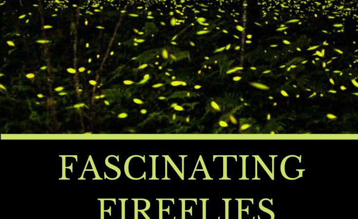Summer Science with Fireflies